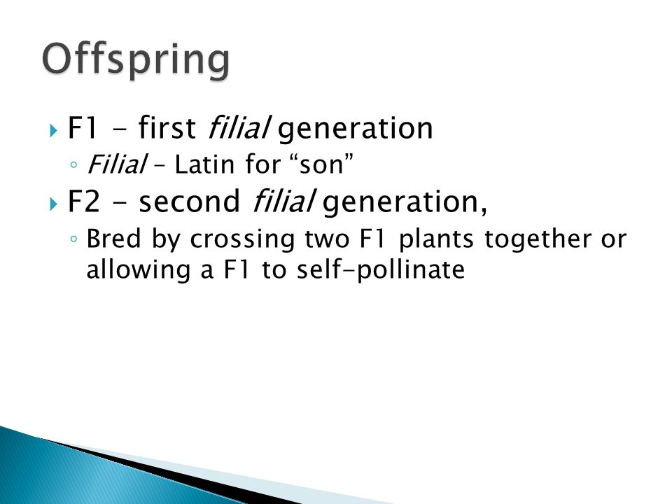 Offspring F1 - first filial generation F2 - second filial generation,