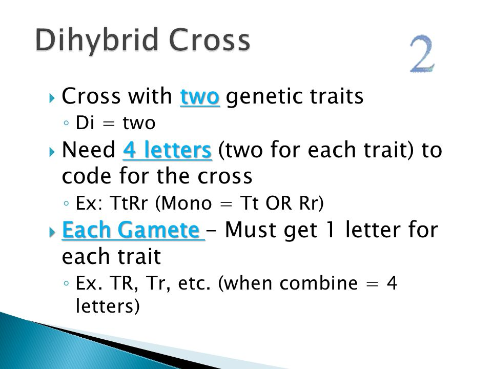 Dihybrid Cross Cross with two genetic traits