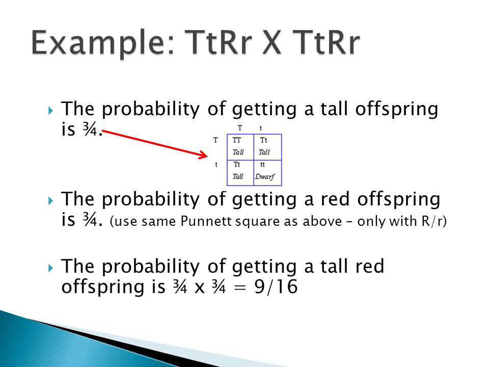 Example: TtRr X TtRr The probability of getting a tall offspring is ¾.