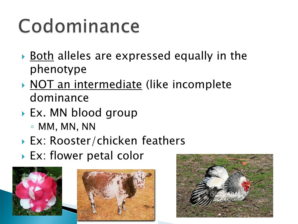 Codominance Both alleles are expressed equally in the phenotype