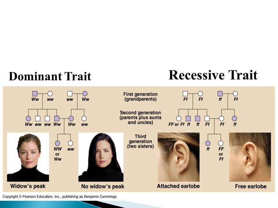 Recessive Trait Dominant Trait