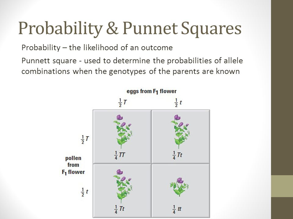 Probability & Punnet Squares