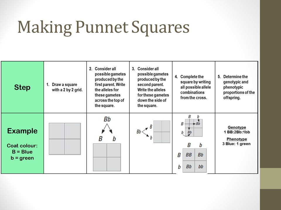 Making Punnet Squares