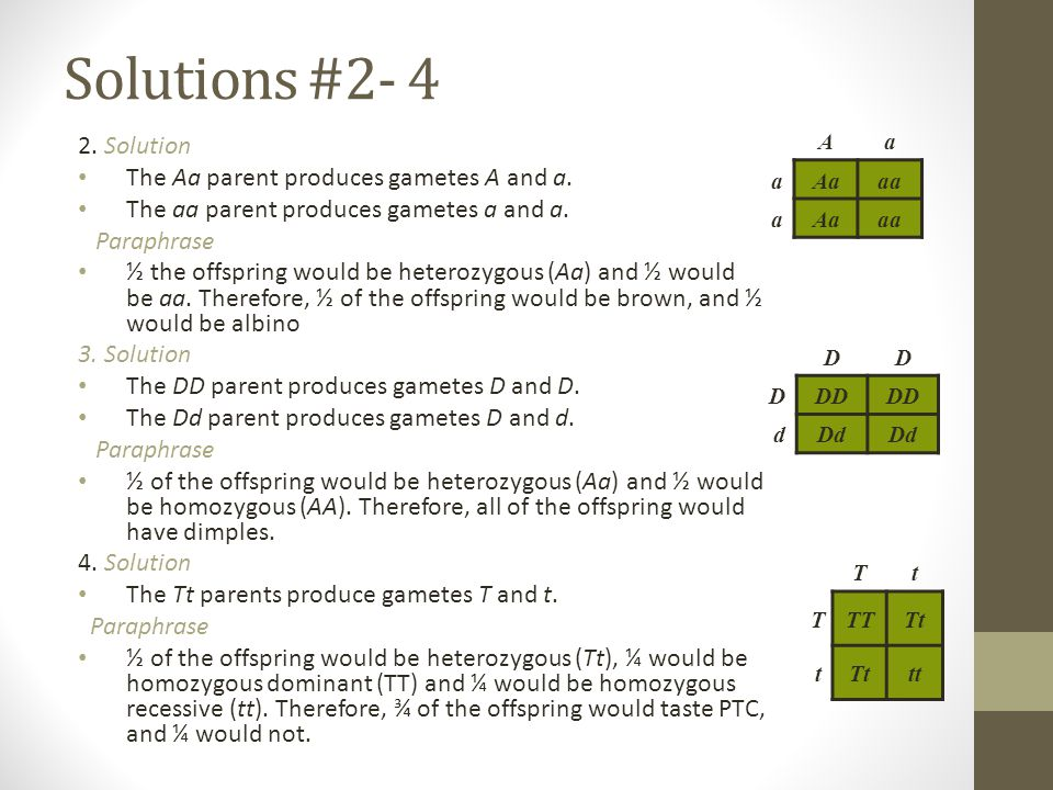 Solutions #2- 4 2. Solution The Aa parent produces gametes A and a.