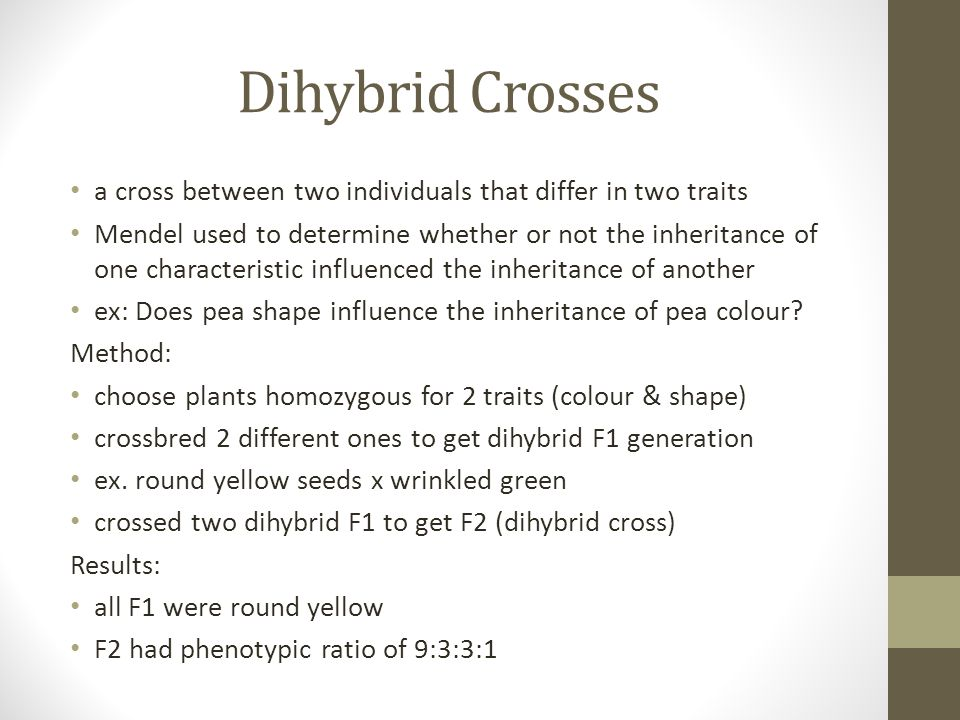 Dihybrid Crosses a cross between two individuals that differ in two traits.