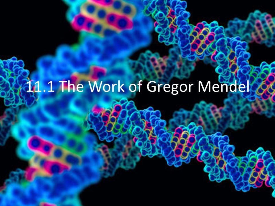 11.1 The Work of Gregor Mendel