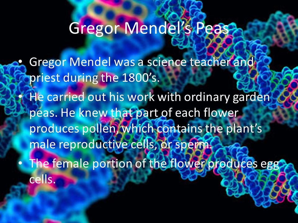 Gregor Mendel's Peas Gregor Mendel was a science teacher and priest during the 1800's.