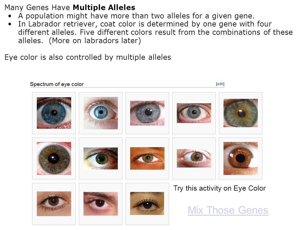 Mix Those Genes Many Genes Have Multiple Alleles
