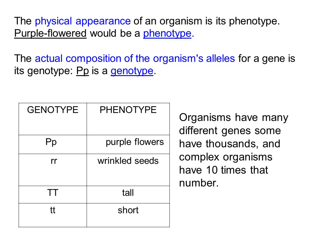 The physical appearance of an organism is its phenotype