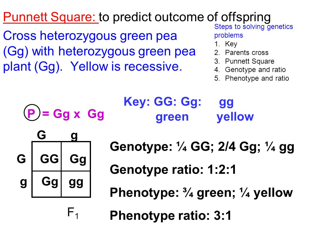 Punnett Square: to predict outcome of offspring