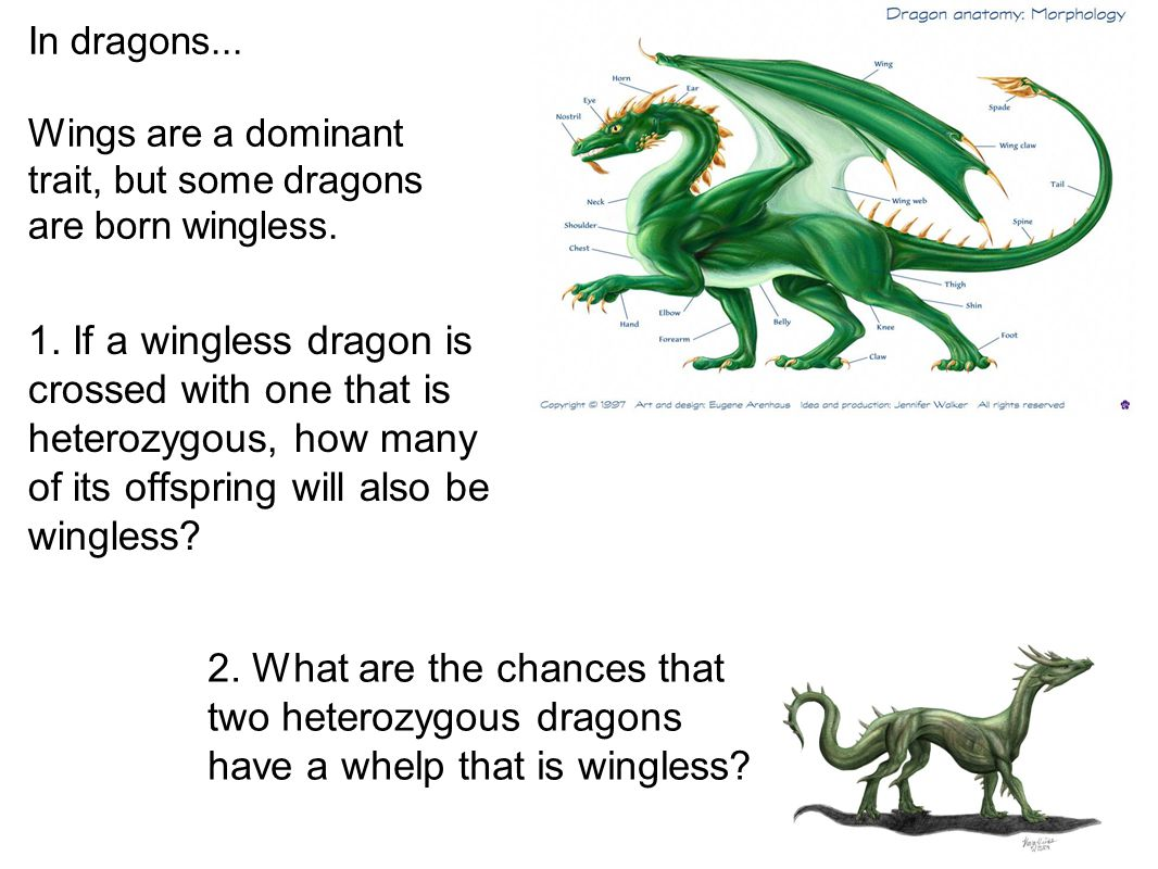 In dragons... Wings are a dominant trait, but some dragons are born wingless.
