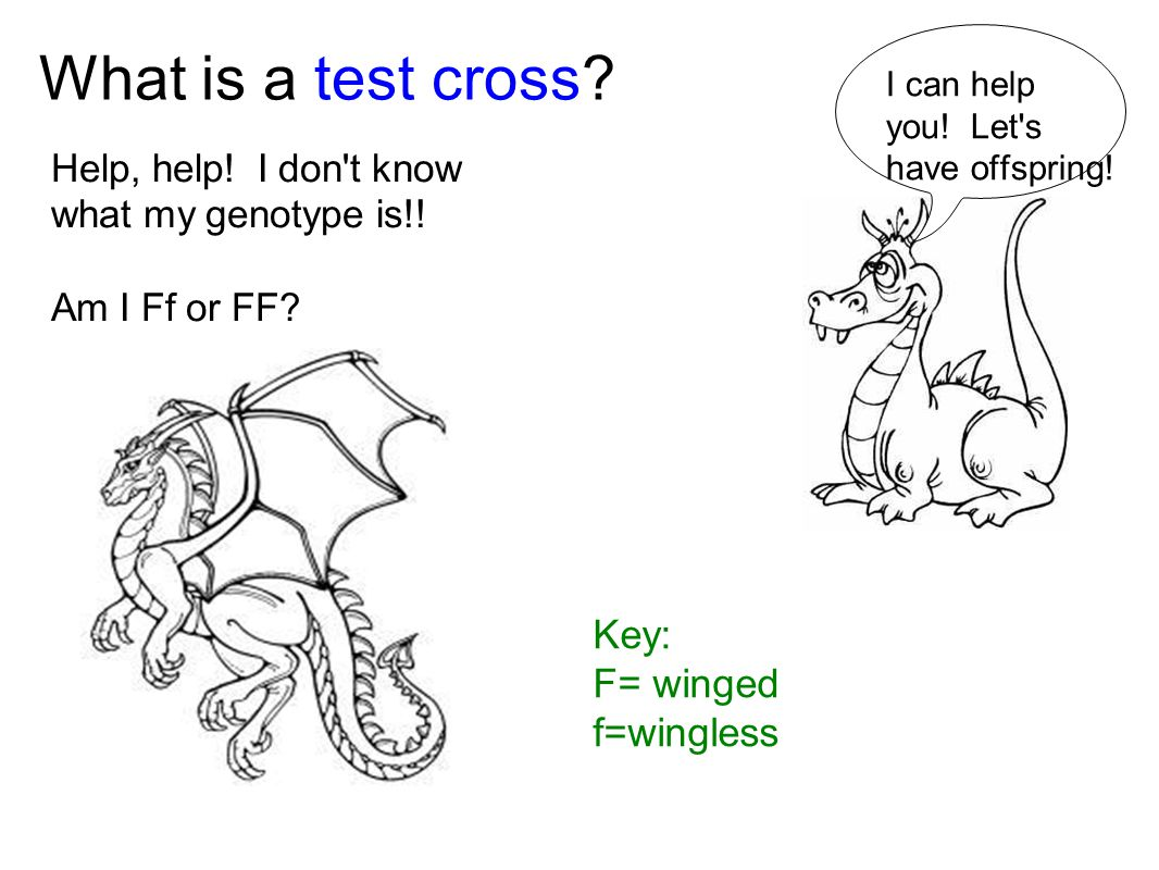 What is a test cross Key: F= winged f=wingless
