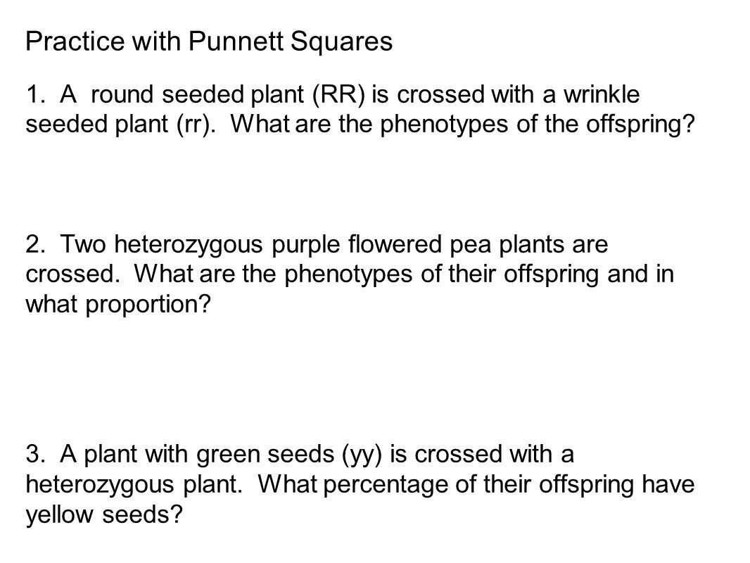 Practice with Punnett Squares