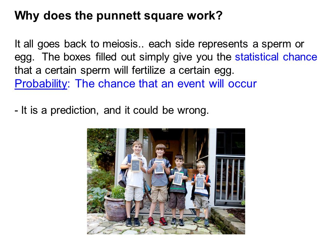Why does the punnett square work