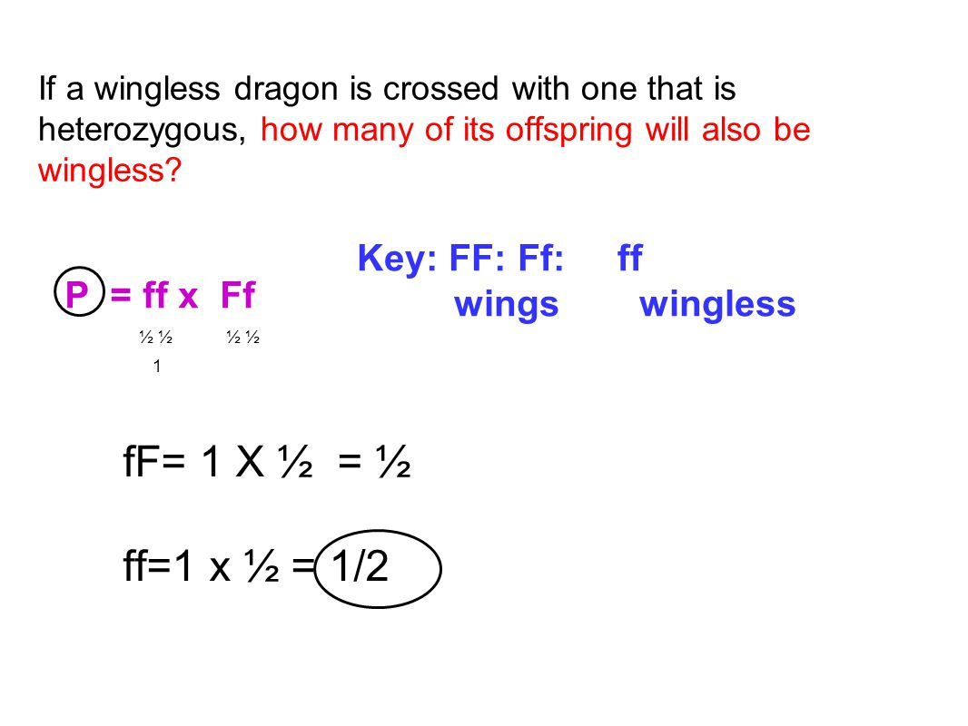 fF= 1 X ½ = ½ ff=1 x ½ = 1/2 Key: FF: Ff: ff wings wingless