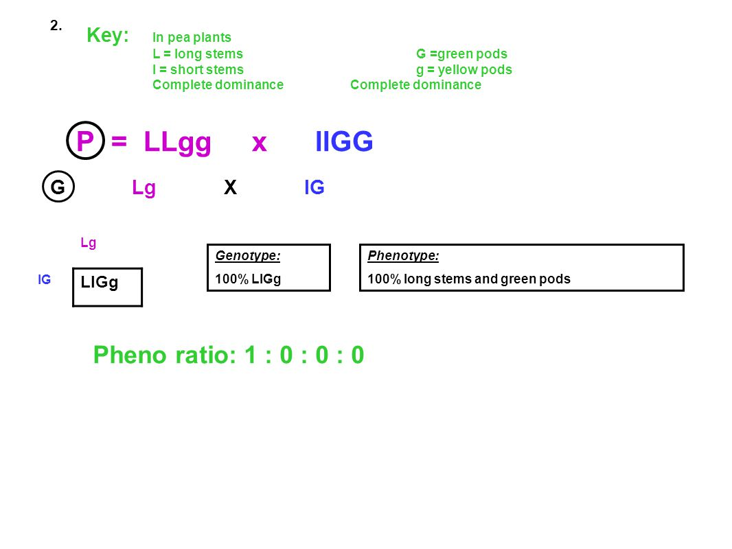 P = LLgg x llGG Pheno ratio: 1 : 0 : 0 : 0 Key: In pea plants
