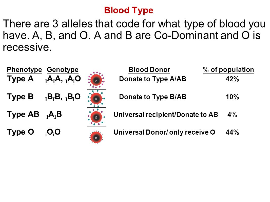 Blood Type There are 3 alleles that code for what type of blood you have. A, B, and O. A and B are Co-Dominant and O is recessive.