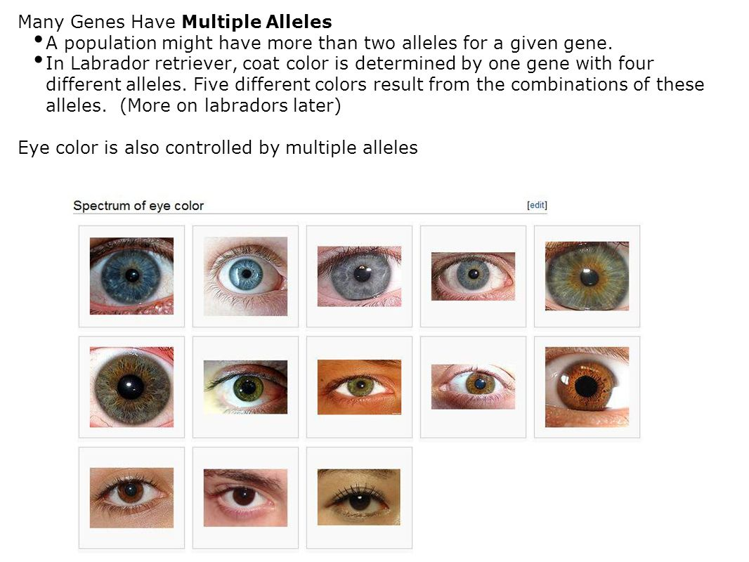 Many Genes Have Multiple Alleles