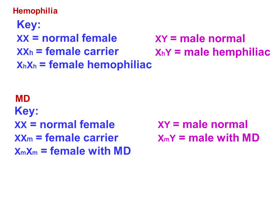 Key: XX = normal female Key: XX = normal female MD