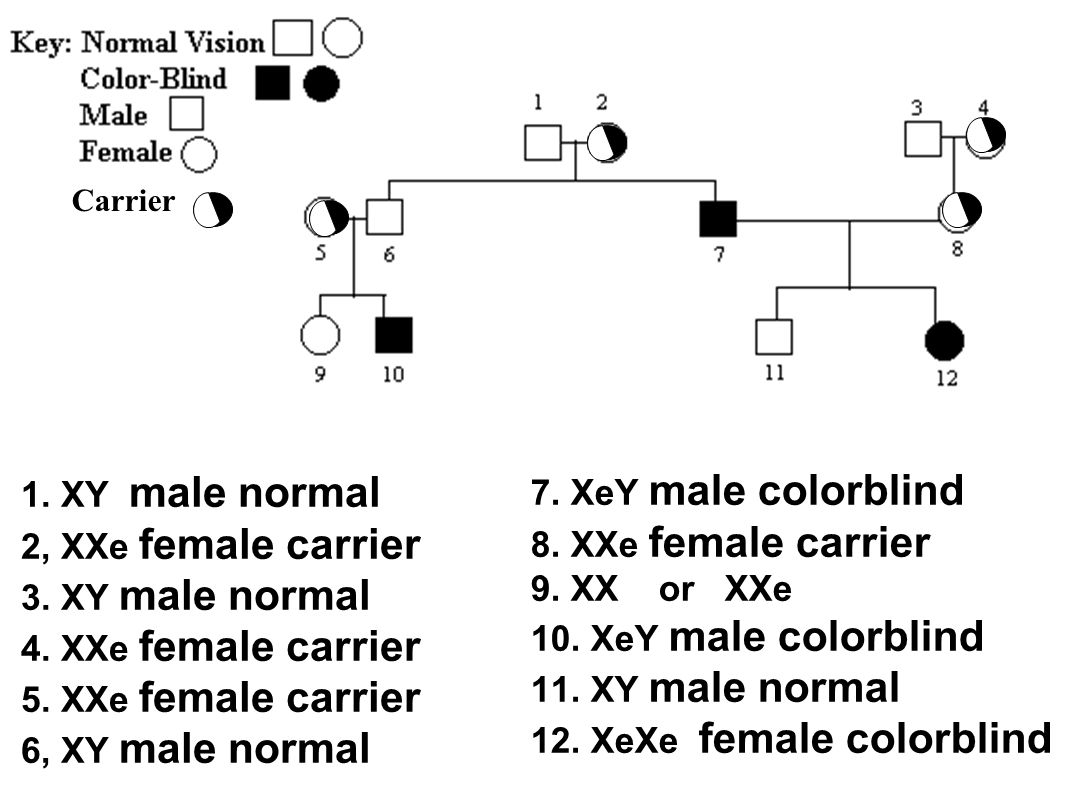 7. XeY male colorblind 1. XY male normal 2, XXe female carrier