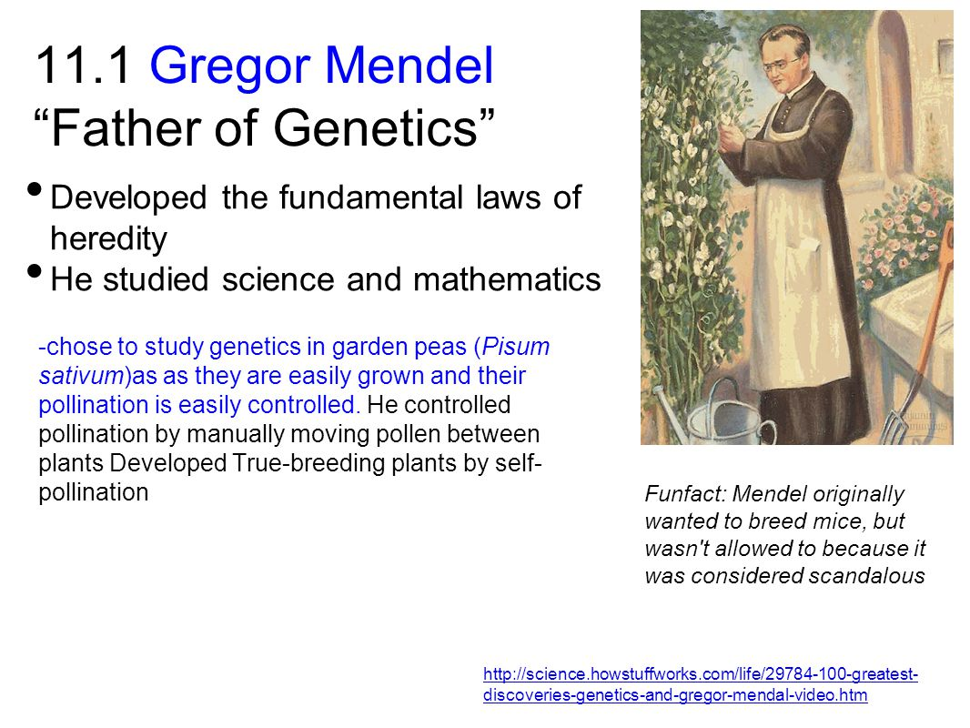11.1 Gregor Mendel Father of Genetics