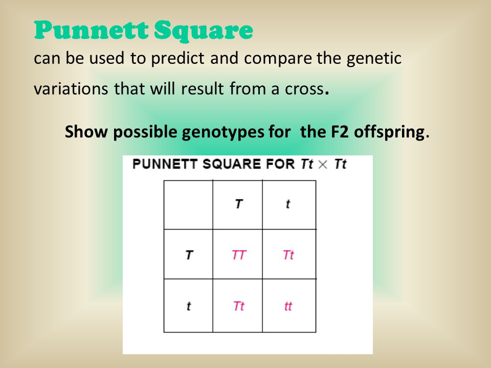 Show possible genotypes for the F2 offspring.