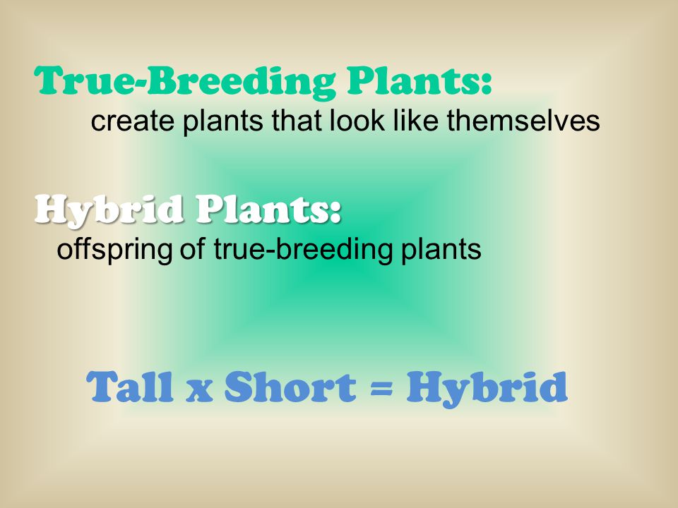 Tall x Short = Hybrid True-Breeding Plants: Hybrid Plants:
