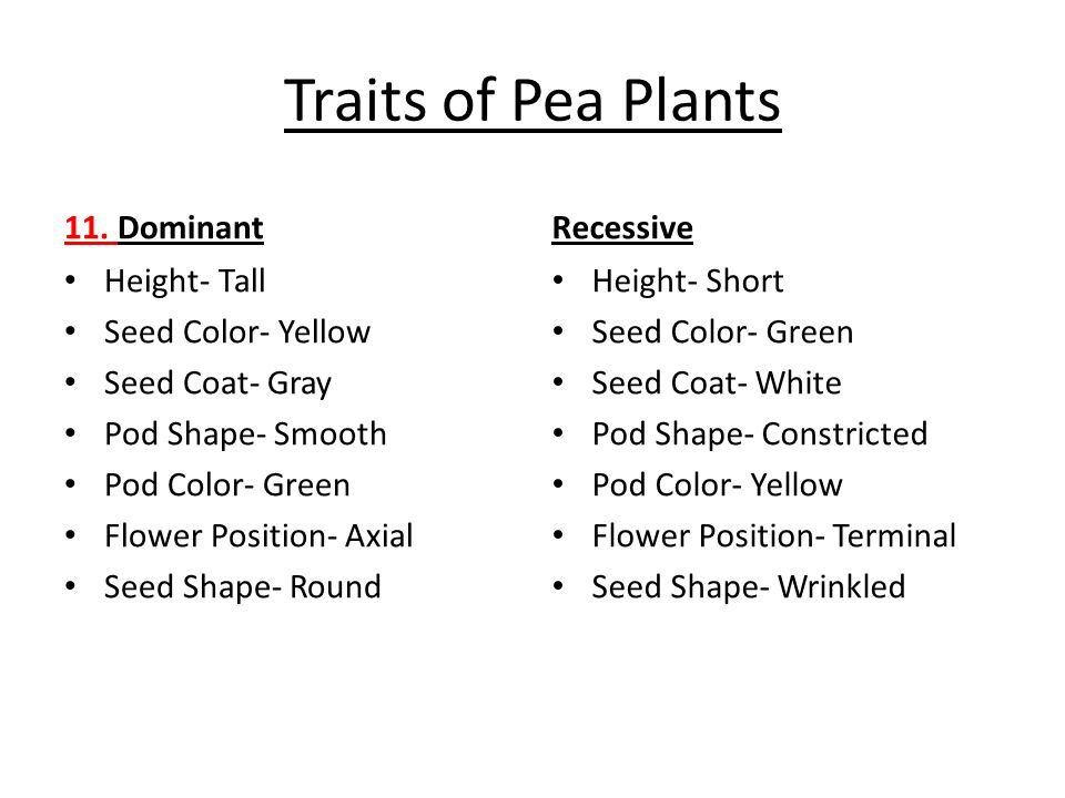 Traits of Pea Plants 11. Dominant Recessive Height- Tall