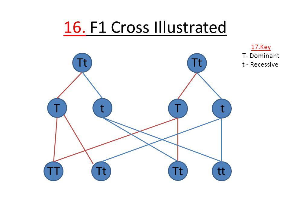 16. F1 Cross Illustrated Tt Tt T t T t TT Tt Tt tt 17.Key T- Dominant