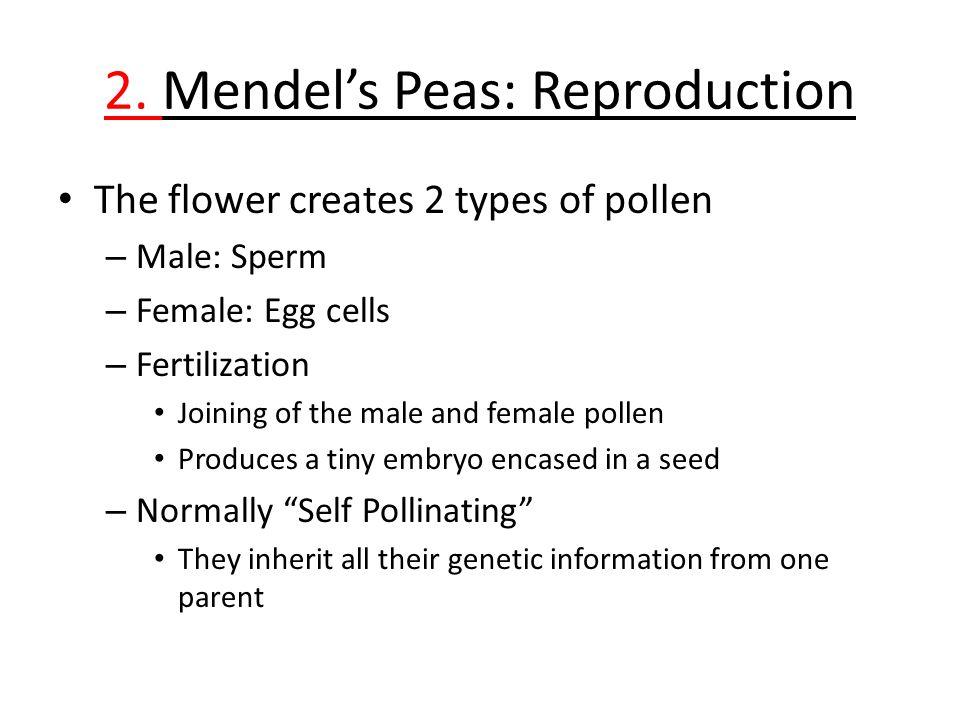 2. Mendel's Peas: Reproduction