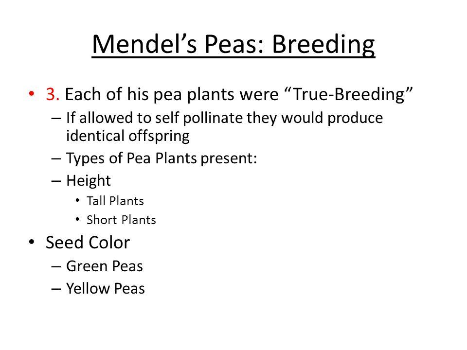 Mendel's Peas: Breeding