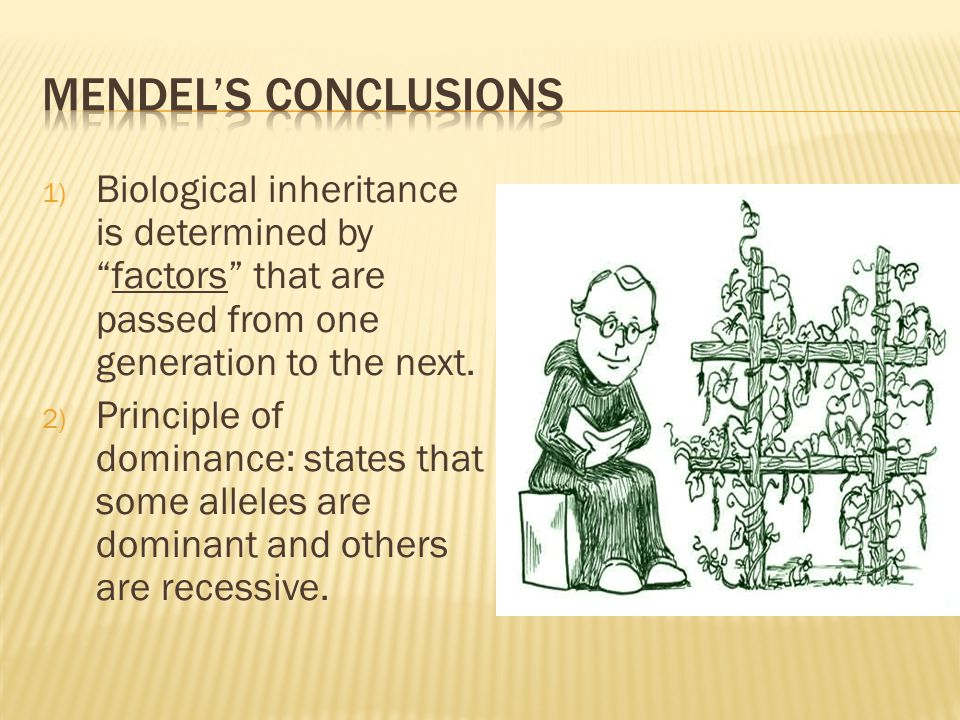 Mendel's conclusions Biological inheritance is determined by factors that are passed from one generation to the next.