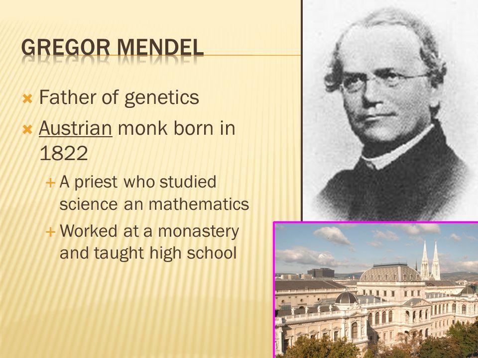 Gregor Mendel Father of genetics Austrian monk born in 1822