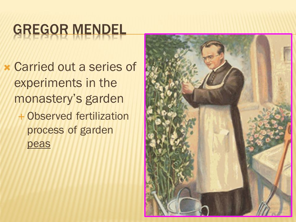 Gregor mendel Carried out a series of experiments in the monastery's garden.