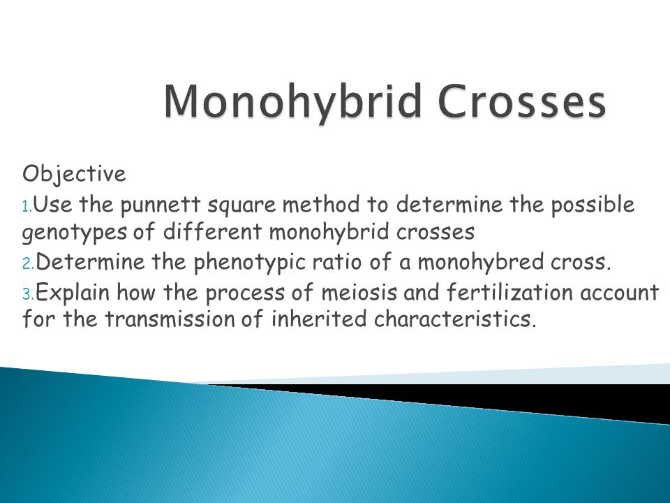 Monohybrid Crosses Objective