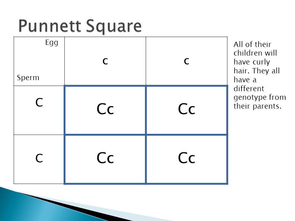 Punnett Square Cc c C Egg Sperm