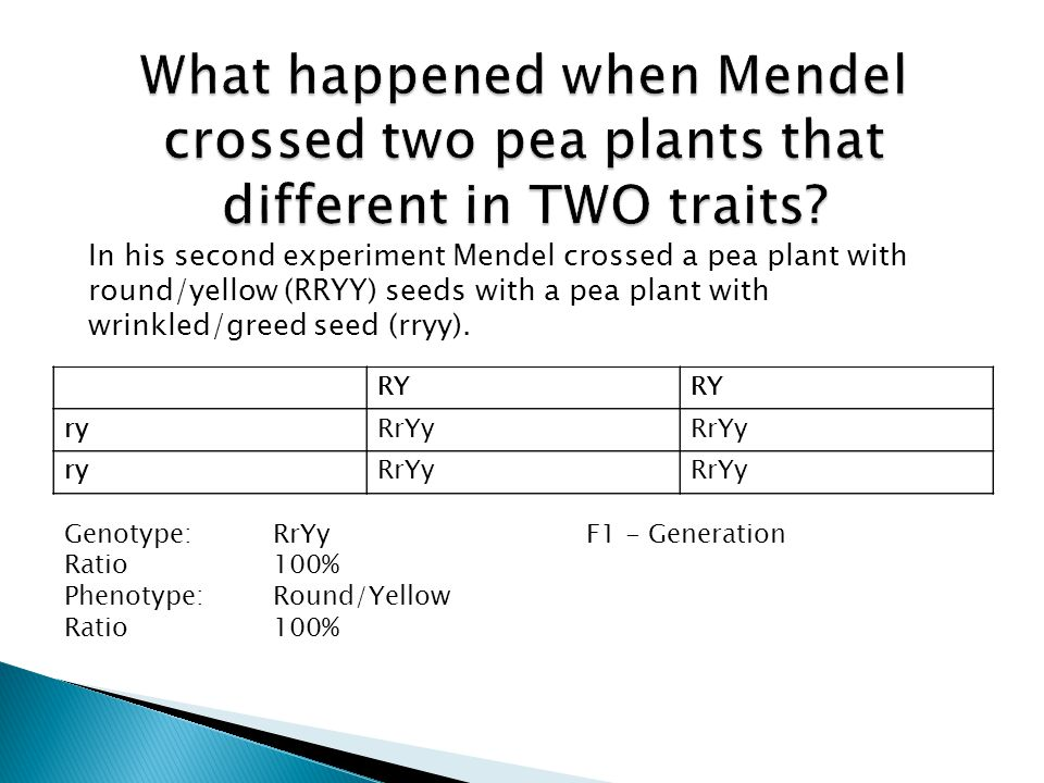 What happened when Mendel crossed two pea plants that different in TWO traits
