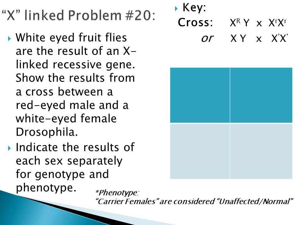 X linked Problem #20: or X Y x X'X' Key: Cross: XR Y x XrXr