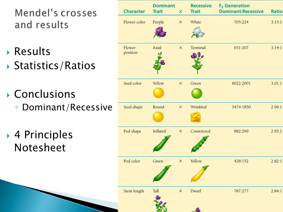 Mendel's crosses and results