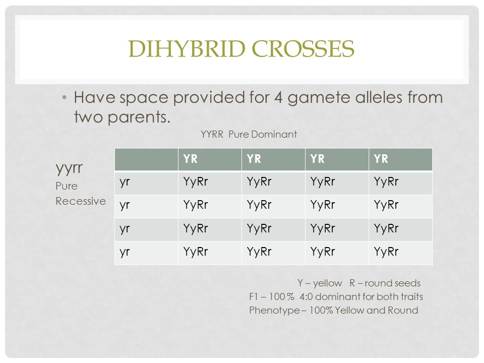 Dihybrid Crosses Have space provided for 4 gamete alleles from two parents. YYRR Pure Dominant. yyrr.