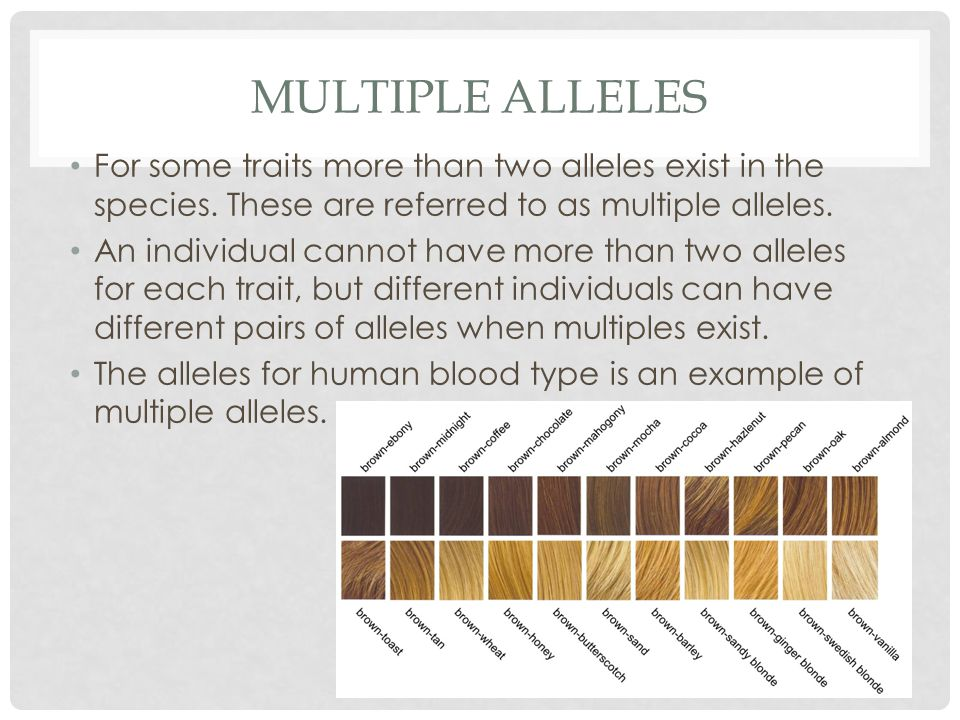 Multiple Alleles For some traits more than two alleles exist in the species. These are referred to as multiple alleles.