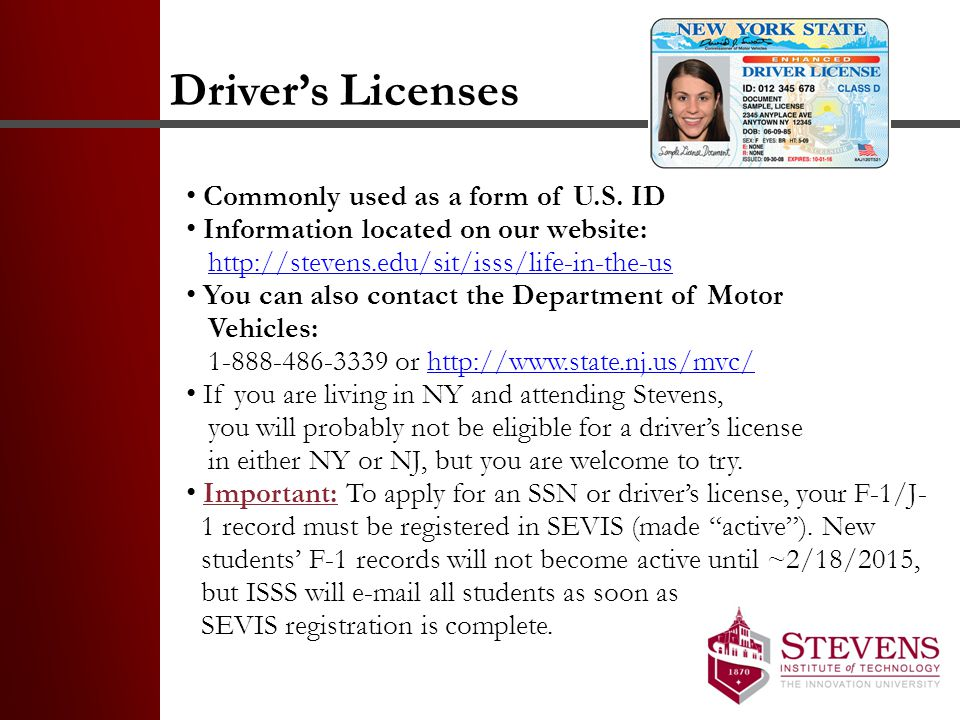 Driver's Licenses Commonly used as a form of U.S. ID