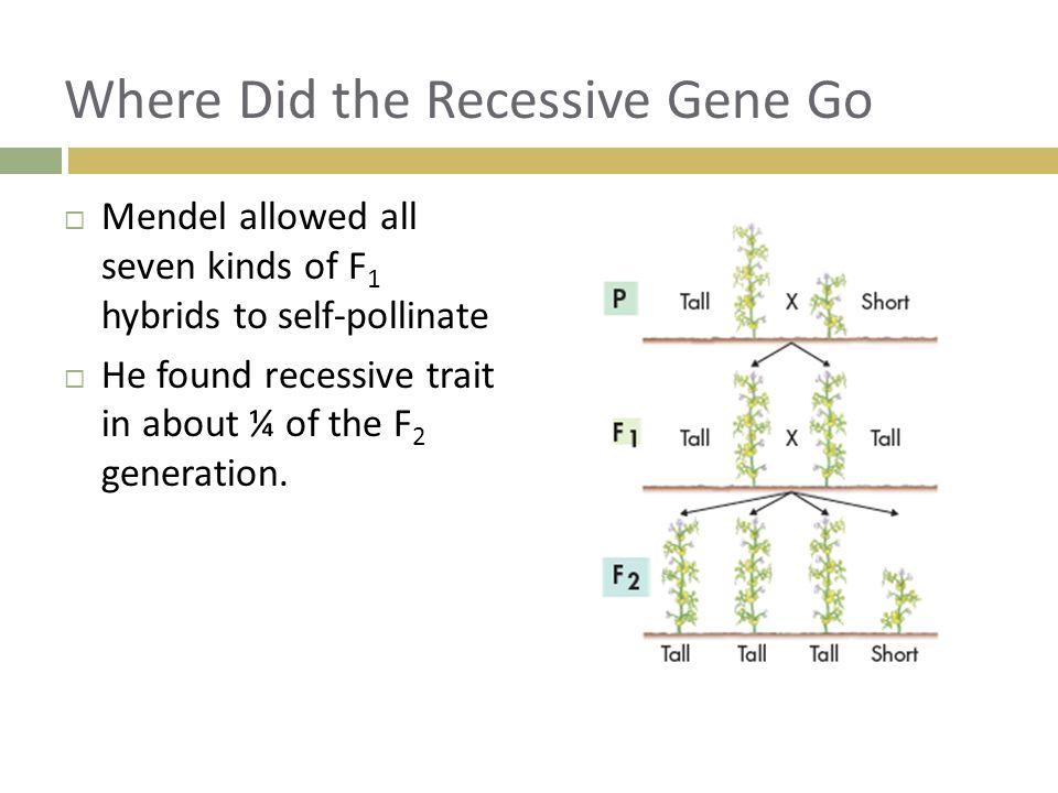 Where Did the Recessive Gene Go
