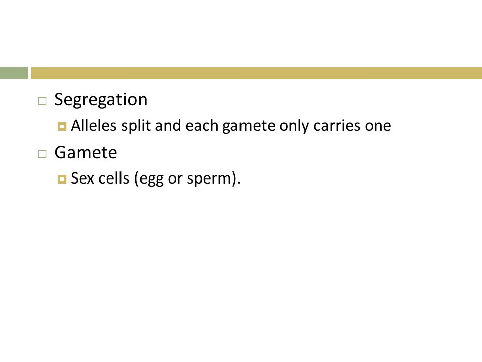Segregation Gamete Alleles split and each gamete only carries one