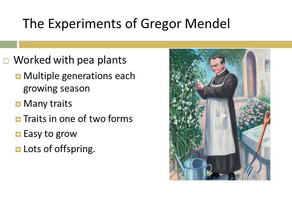 The Experiments of Gregor Mendel