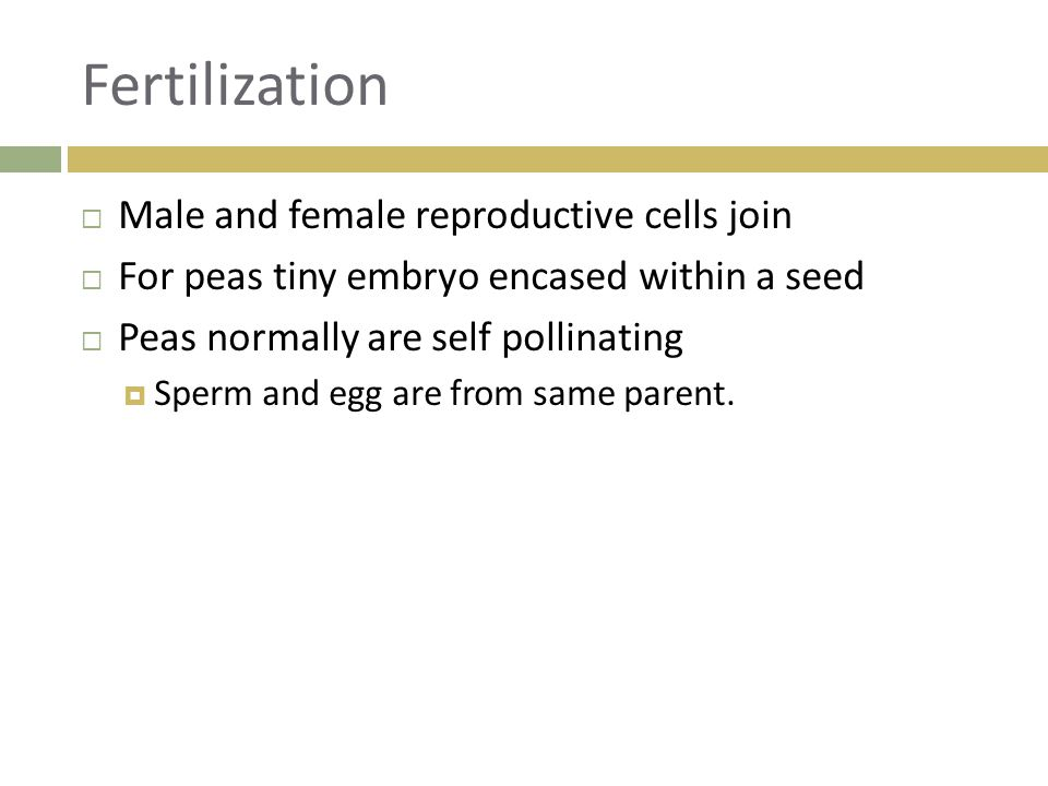 Fertilization Male and female reproductive cells join