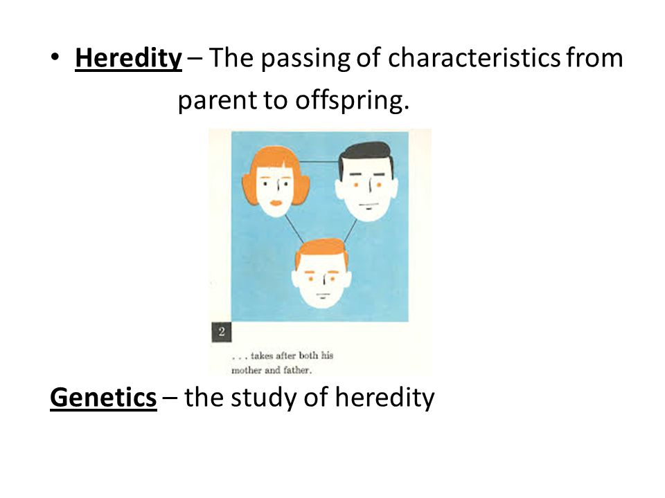 Heredity – The passing of characteristics from