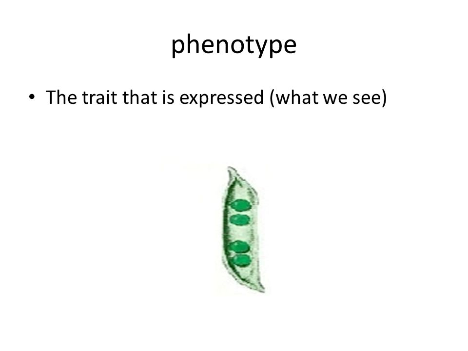 phenotype The trait that is expressed (what we see)