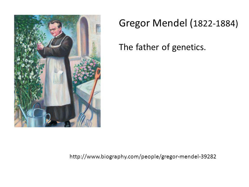 Gregor Mendel (1822-1884) The father of genetics.