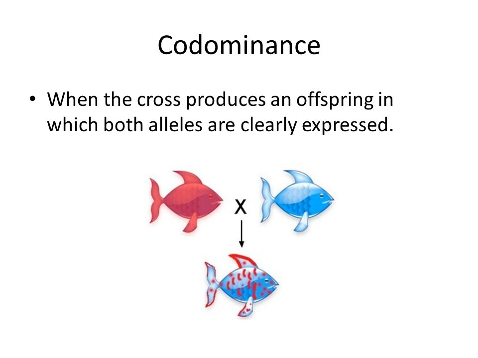 Codominance When the cross produces an offspring in which both alleles are clearly expressed.